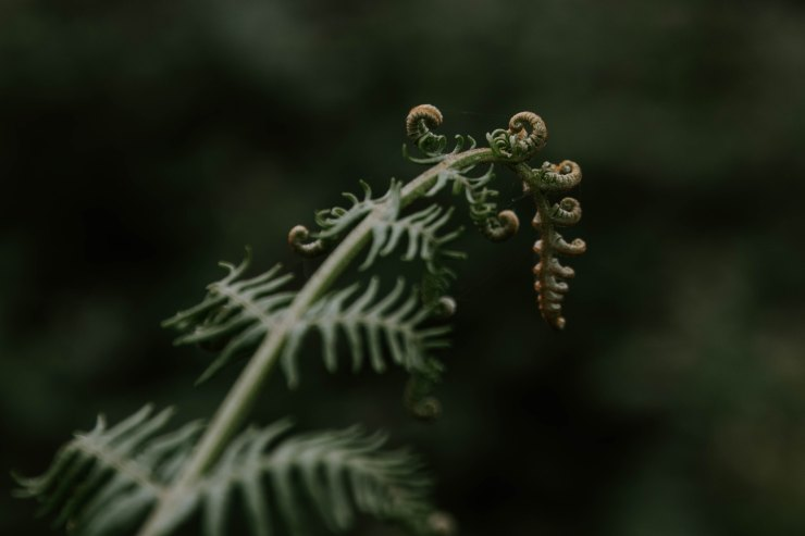 new life, fern opening